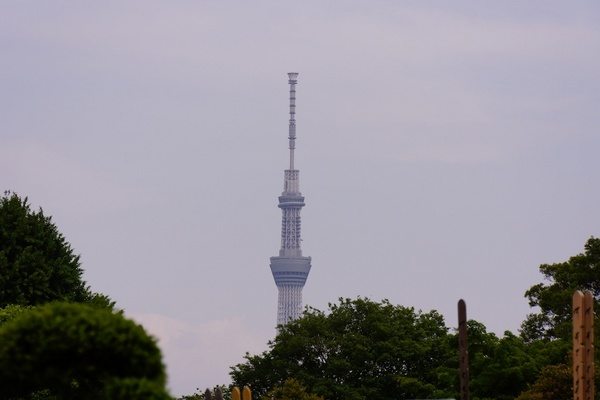 DSC00319.jpg